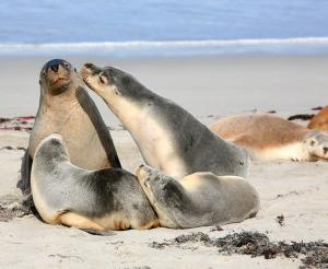 Australien - Naturerlebnisse made in Down Under
