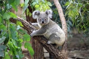 Australien - Terra Australis