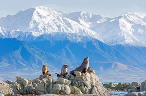 Neuseeland - Fjorde, Vulkane und Begegnungen