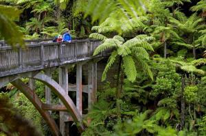 Neuseeland - Natur hautnah erleben