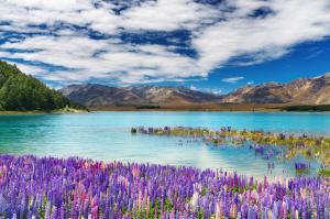 Neuseeland: Höhepunkte
