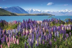 Neuseeland für Entdecker